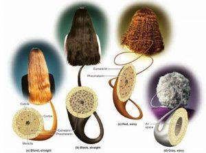 Màu tóc cũng thể hiện sức khoẻ của bạn